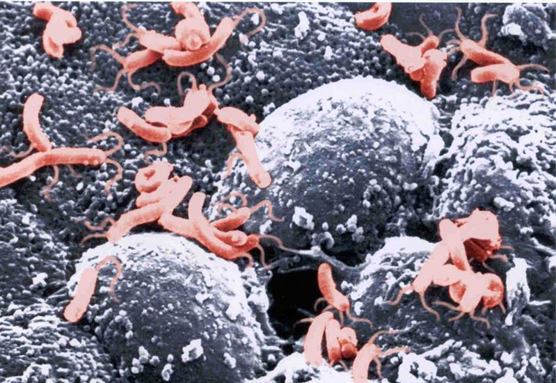Гепатит с откуда берется