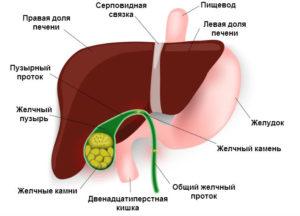 Основные симптомы болезней желчного пузыря