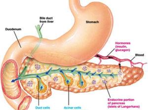 лечение стеатоза поджелудочной железы